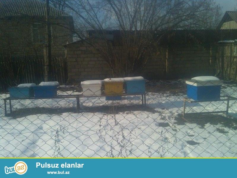 İsmayıllı rayonunun aşağıbaş qəsəbəsində 6 ədəd arı ailəsi satılır...