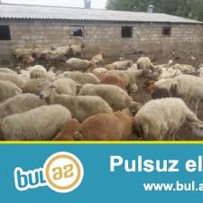 100 hektar torpaq sahesi olan ferma satilir.Yay və qış ücun 2 tovle,2 çoban evi var...