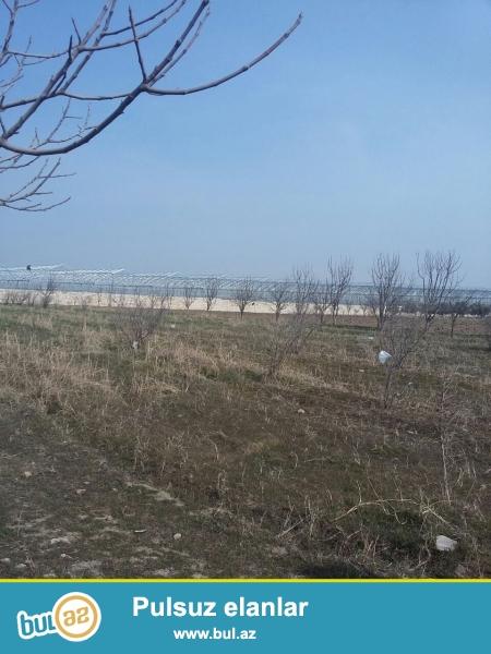Məhəmmədli Mehdiabad  yolunda,Atçılıq deyilən ərazidə yoldan 300 mt aralıqda  2 hektar torpaq sahəsi  satılır...