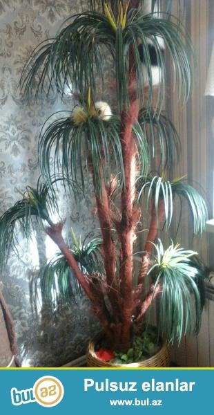 Süni dekorativ palma ağacı satıram