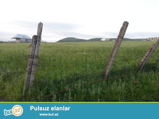 Şamaxı rayonu Əngəxaran kəndində 10 sot torpaq sahəsi təcili satılır...